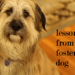 Lessons From Our Foster Dog