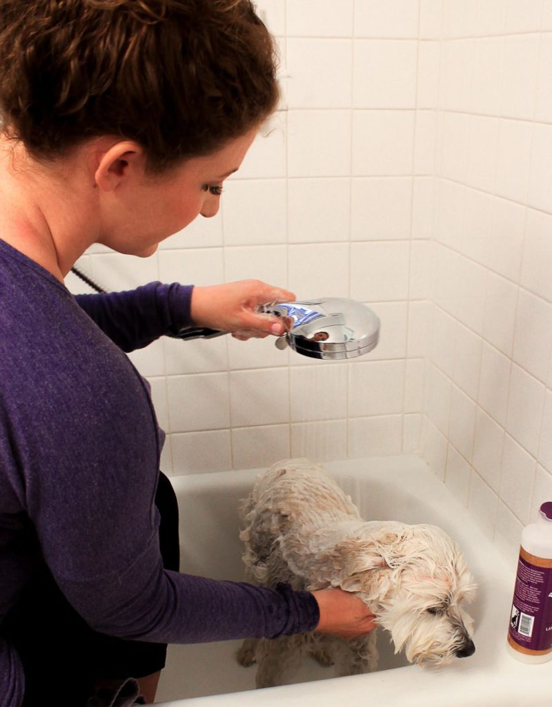 Small Bathroom Dog-Friendly DIY Update