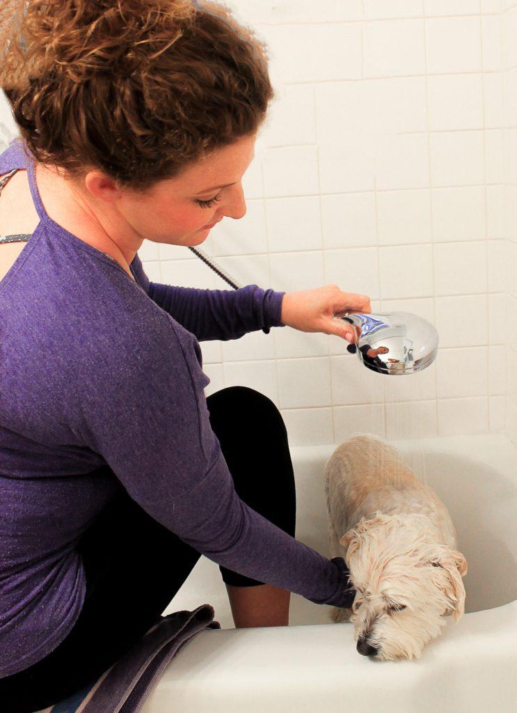 Moen Propel handheld shower head