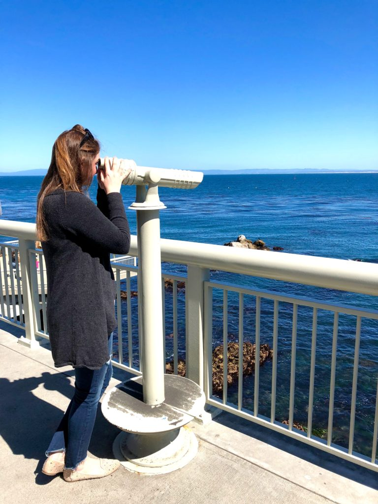 spotting whales at the Monterey Bay Aquarium