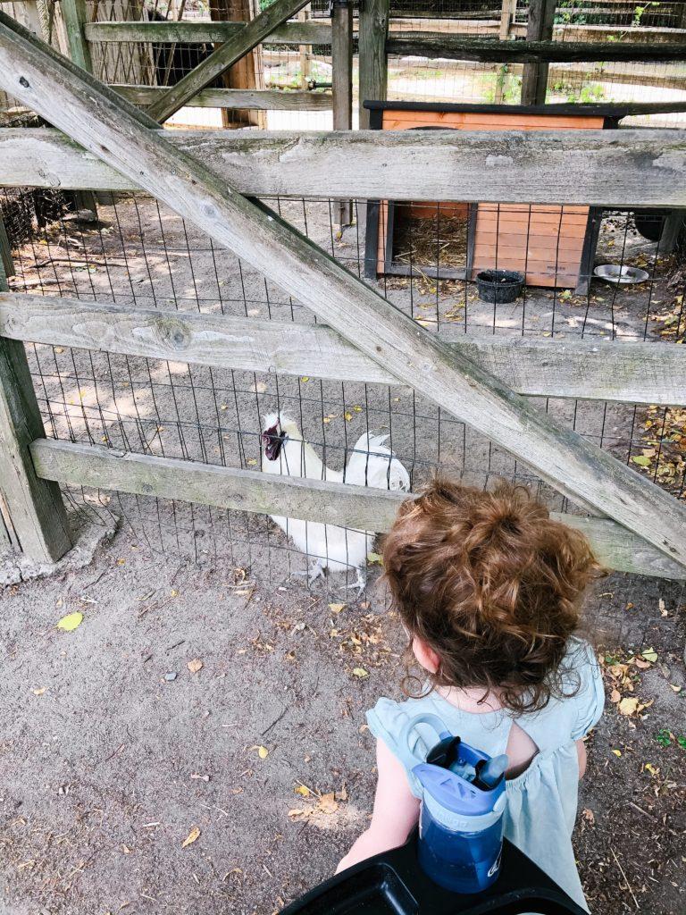Zoo-New-England-Stoneham-MA