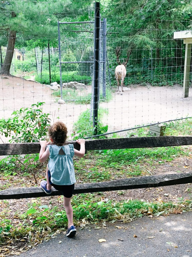 Stone-Zoo-reindeer